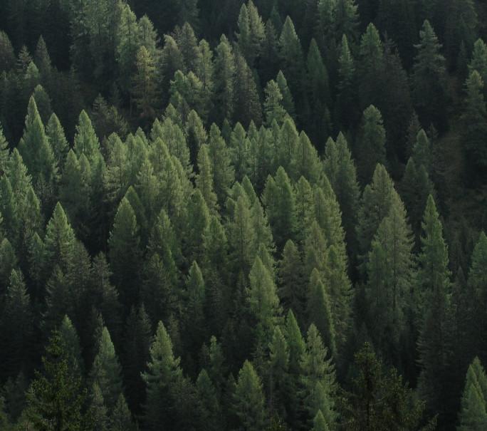 reforestation en france kozze